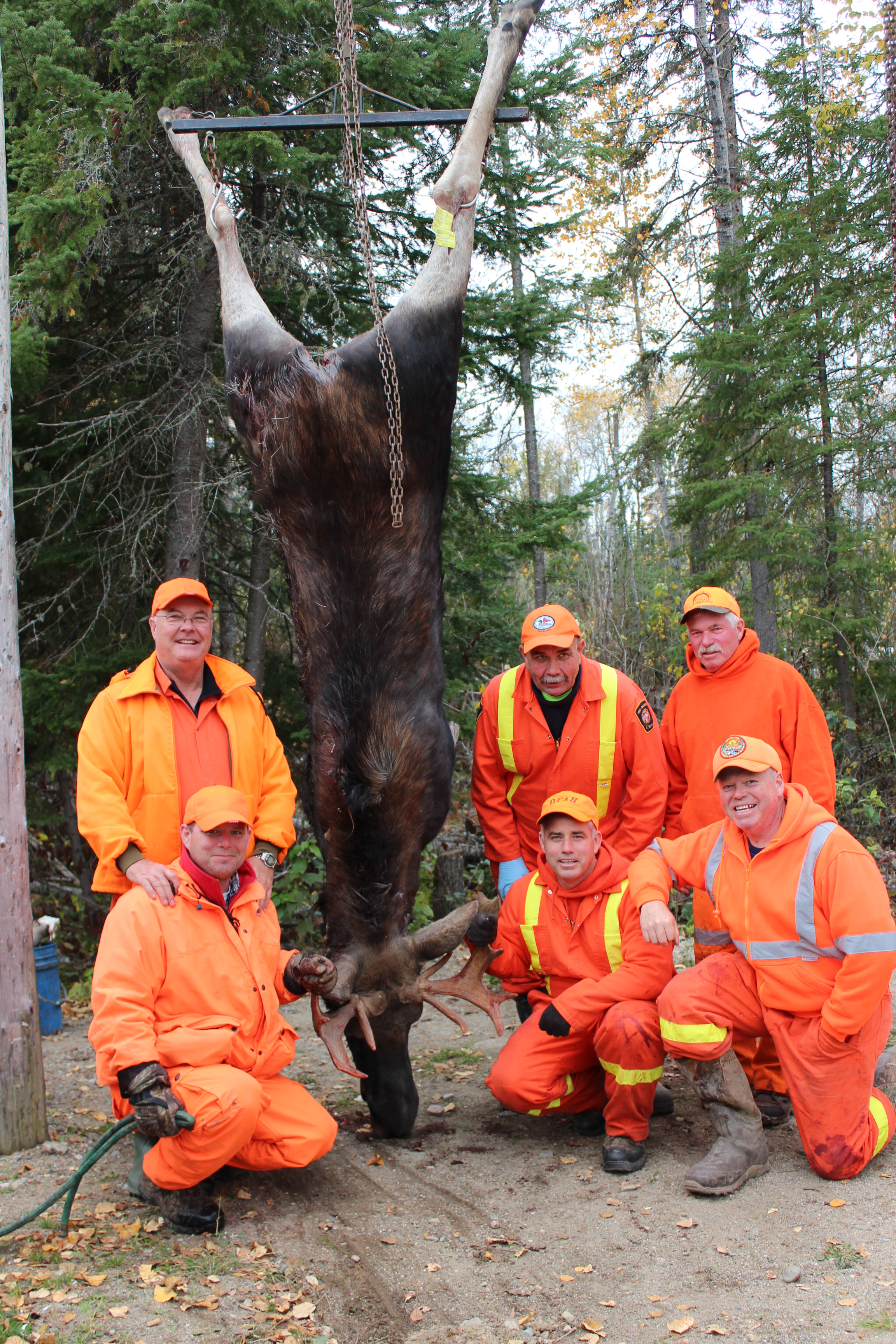 moose hunt at big bear camp